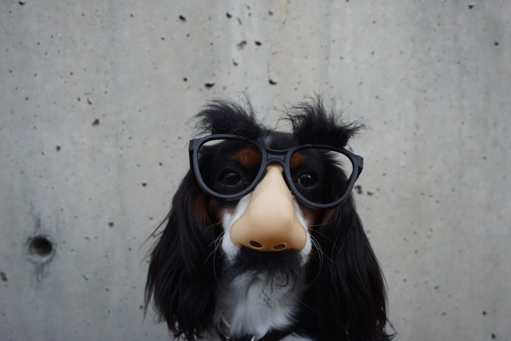 dog with groucho marx disguise